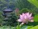 Đáng khâm phục nhất của đời người là vươn lên sau khi vấp ngã - Phật dạy